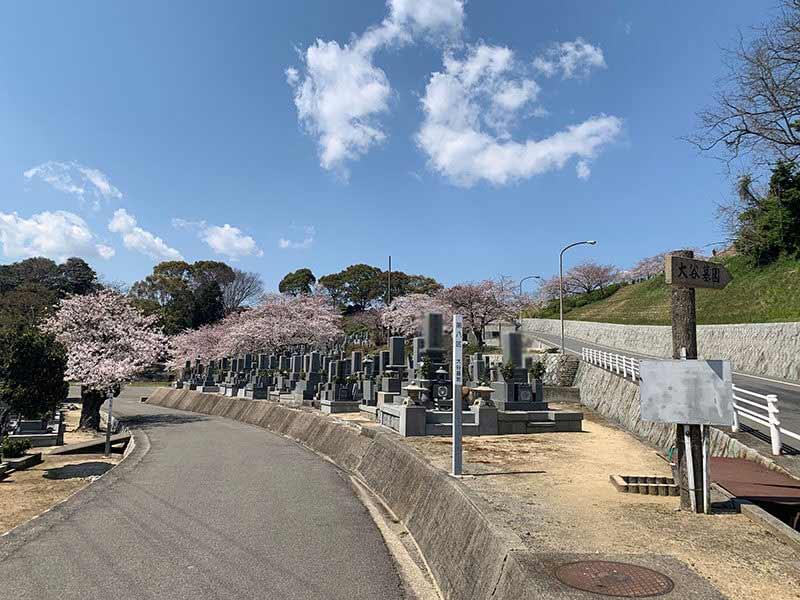 今治市営 大谷墓地 桜が咲き誇る墓地内