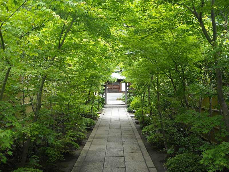 龍峰院 美しい緑のトンネル