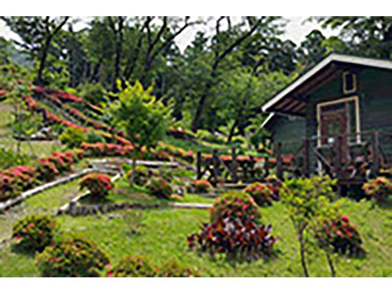 千の風 みらい園 緑が豊かな園内