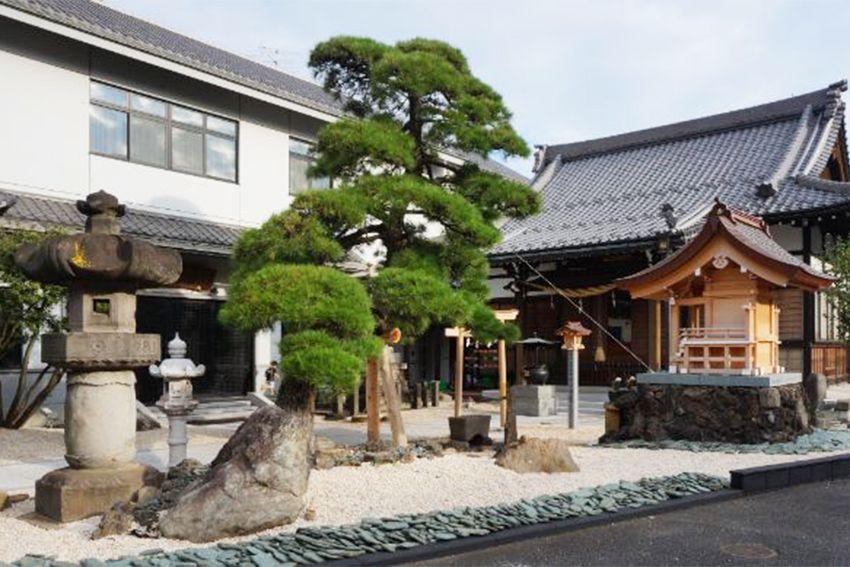 恵光メモリアル新宿浄苑 瑞光寺の松の木