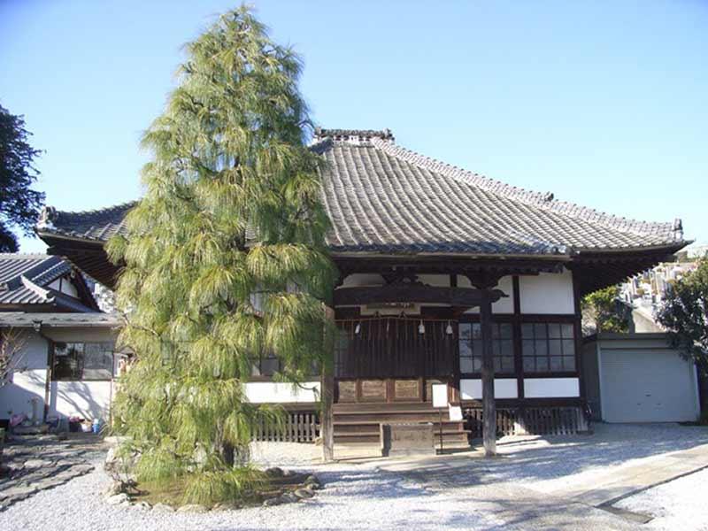 妙安寺 手入れされた植栽が美しい本堂