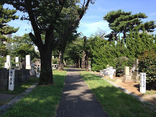 都立 青山霊園 自然に囲まれた参道