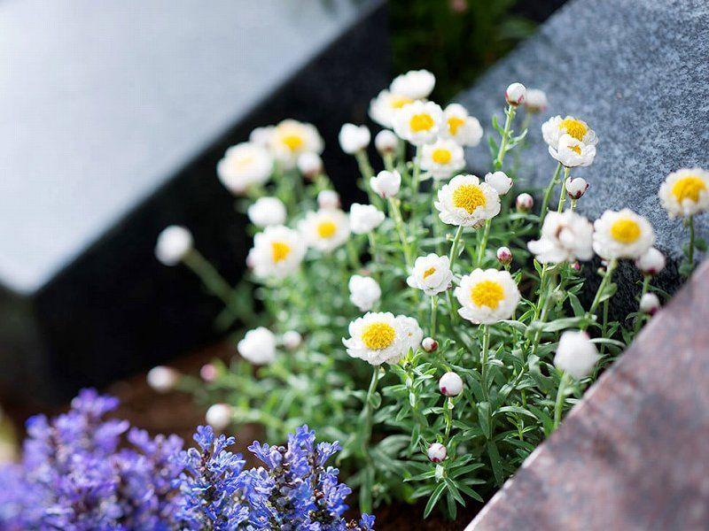 西勝寺 あざみ野庭苑 樹木葬に供えられた花