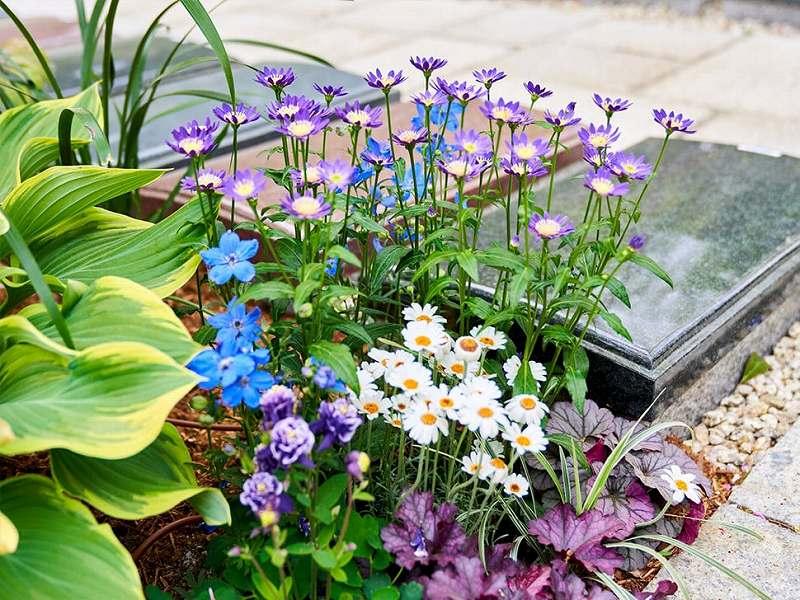 宝珠院 芝庭苑 花に囲まれた墓地