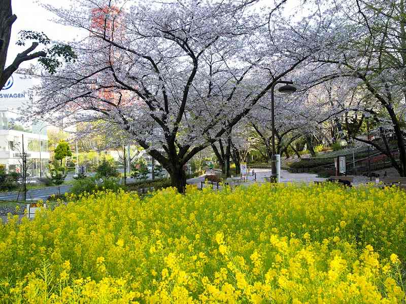 宝珠院 芝庭苑 庭園で楽しめる四季折々の花