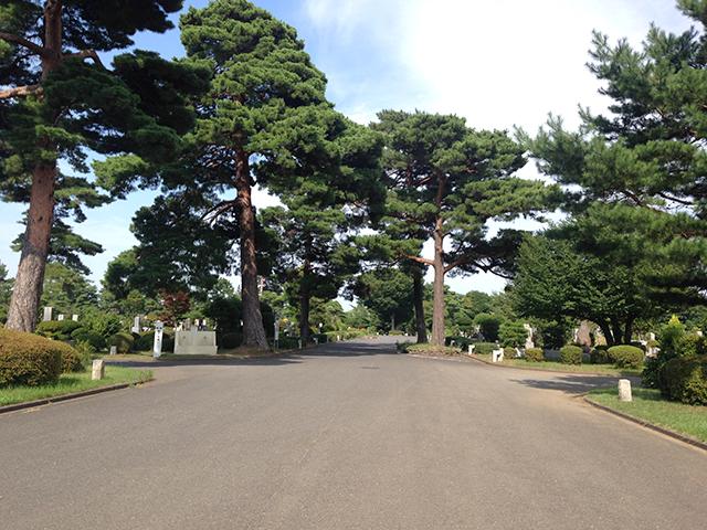 都立 小平霊園 木々に囲まれた広い参道