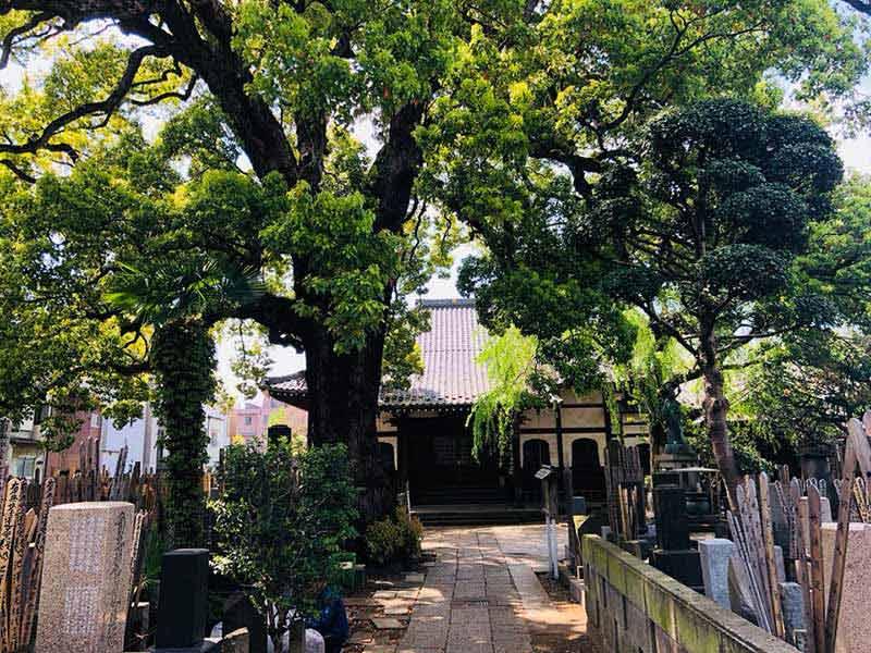 大雄寺 のうこつぼ