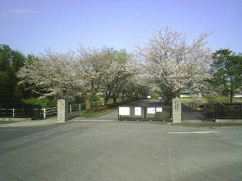 市原市営 能満墓園 桜並木の入り口