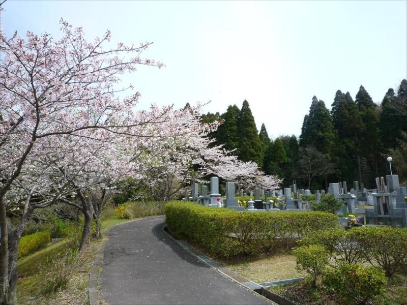 一宮町営 宮の森霊園 桜と木に囲まれた園内