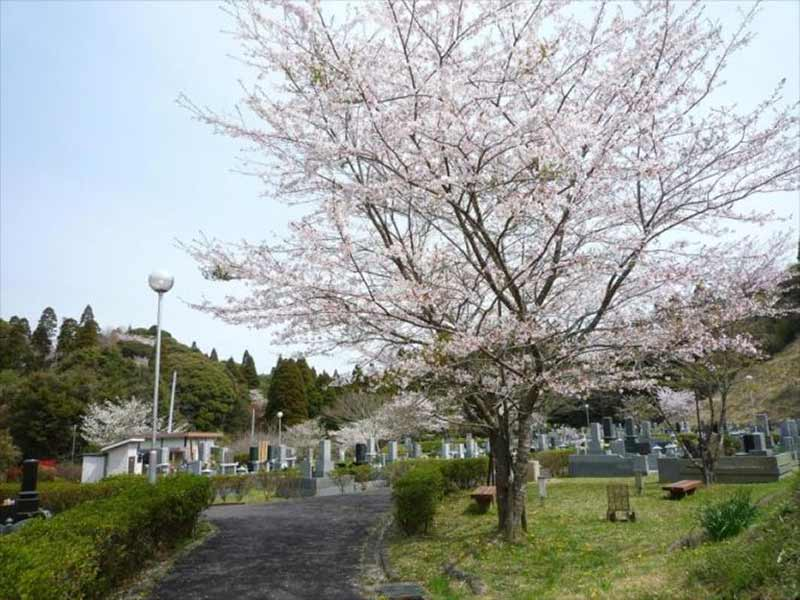 一宮町営 宮の森霊園 桜咲く園内