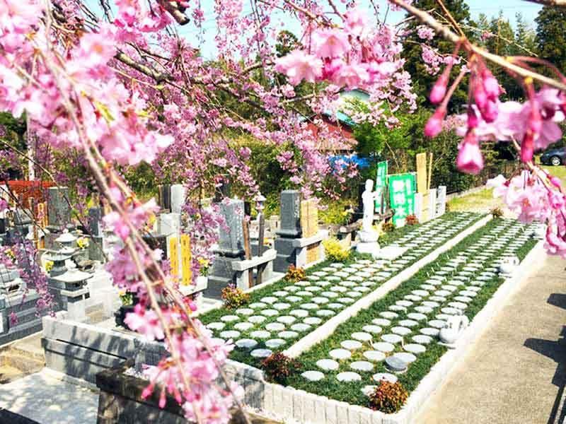 市原さくら樹木葬墓地