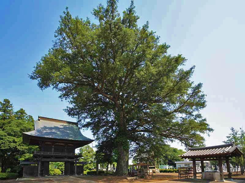 壬生樹木葬墓地