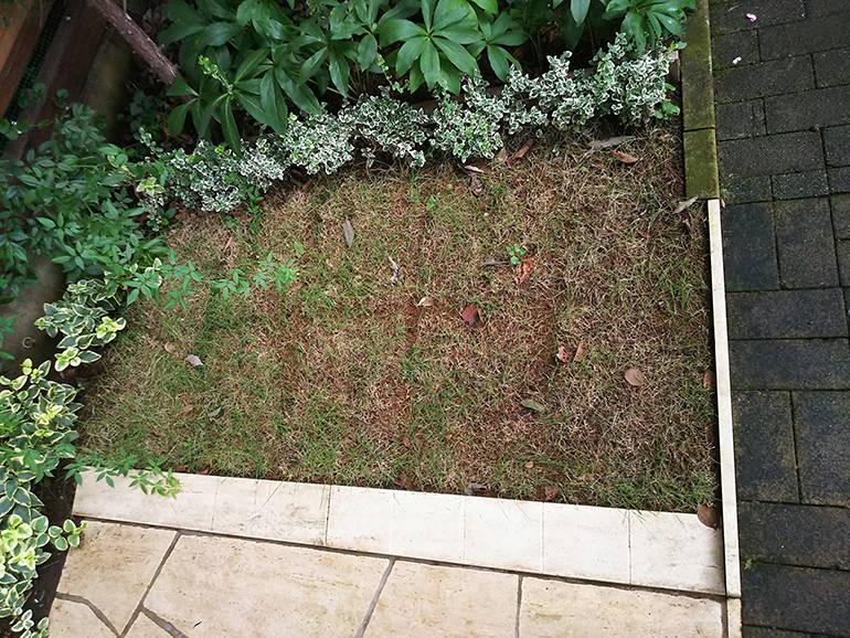 小平ふれあいパーク 手入れされた芝生