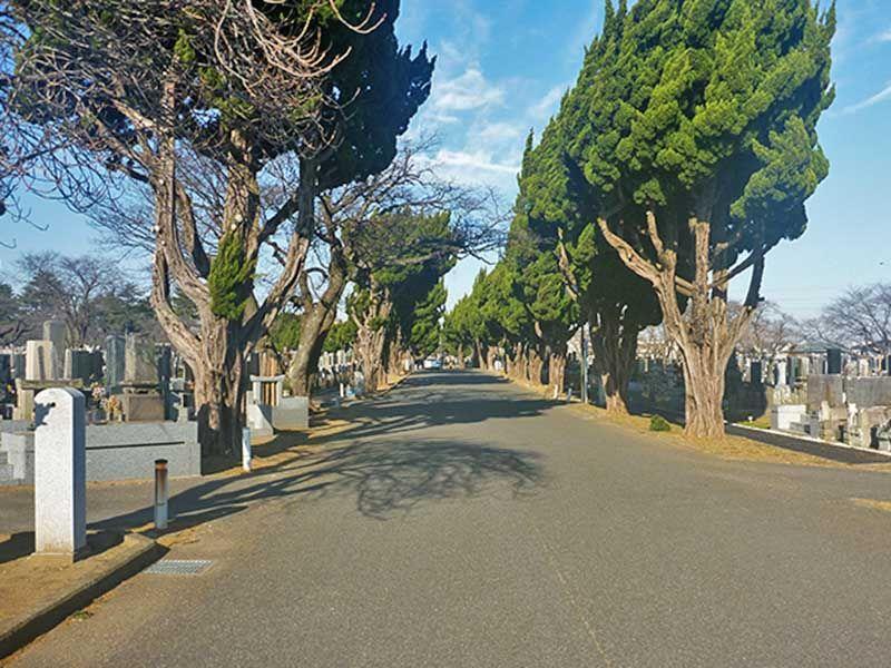 並木道の緑が美しい桜木霊園
