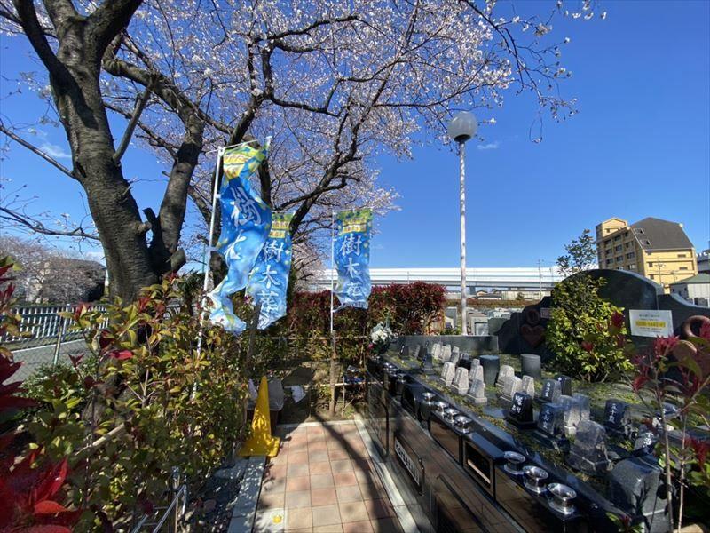 浦和さくら聖地苑 桜の木がある樹木葬