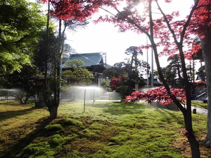 稲荷山 光明院 紅葉とスプリンクラー