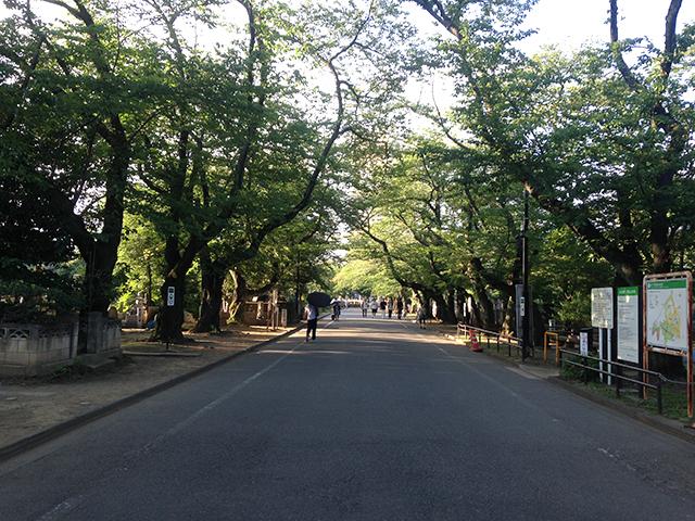 都立 谷中霊園 園路えお覆う木々