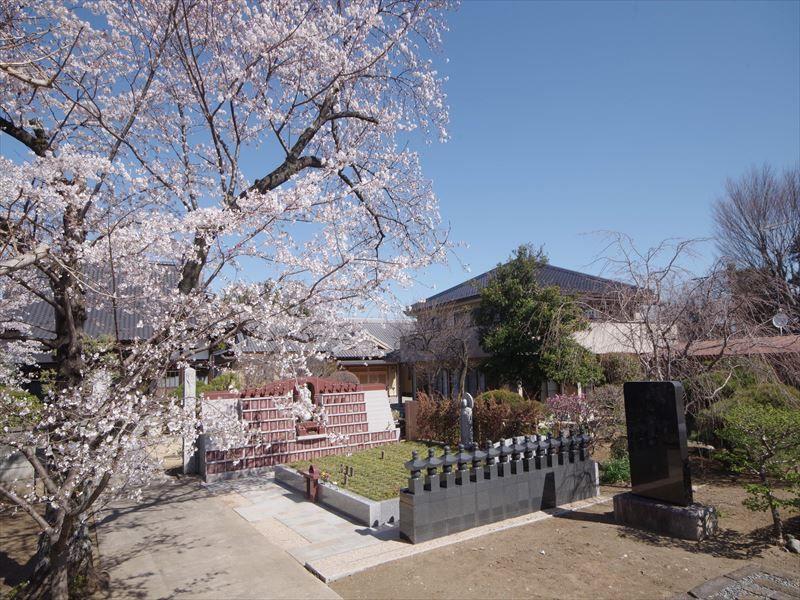 放光寺 永代供養墓・樹木葬 花に囲まれた苑内