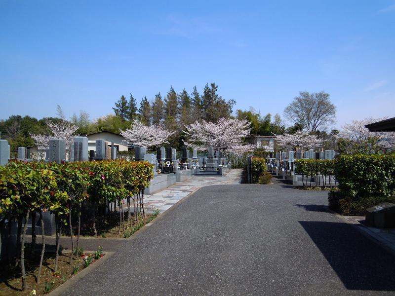 岩槻光輪浄苑 桜が咲く一般墓地