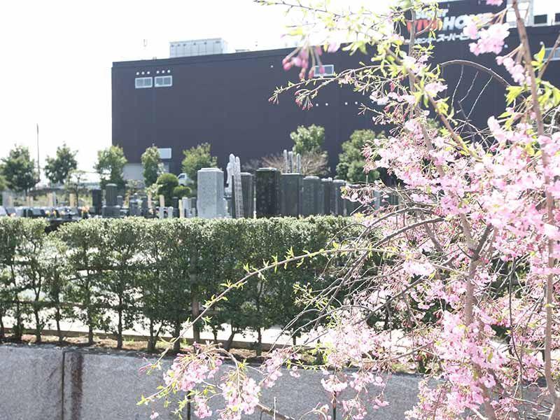 大林寺別院霊園 咲き誇る花