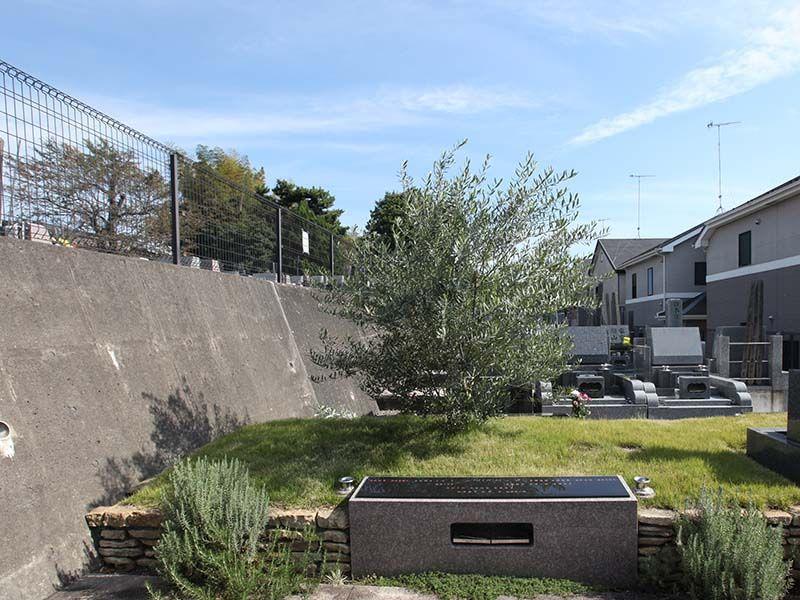 厚木やすらぎ霊園 樹木葬「オリーブ葬墓地」