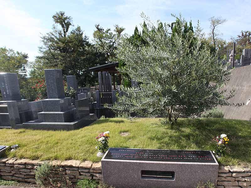 厚木やすらぎ霊園 オリーブを墓標にした「オリーブ葬墓地」