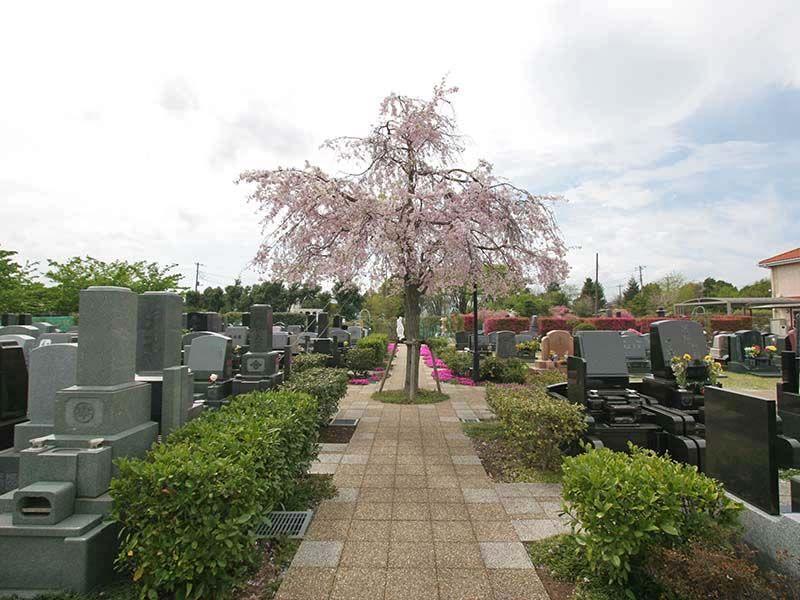 メモリアルパーク花の郷聖地 相模大塚 園内を彩る桜