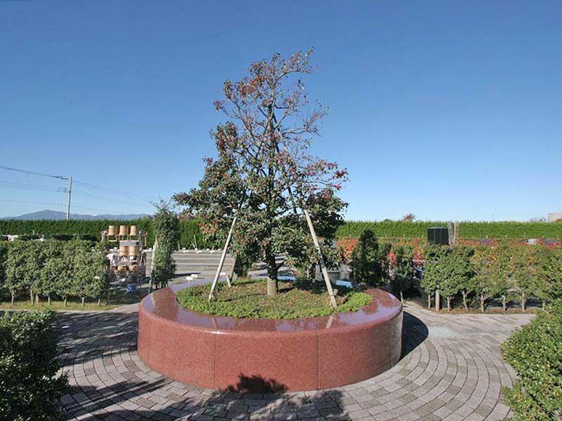 座間霊園 天空の郷 園内にそびえるシンボルツリー