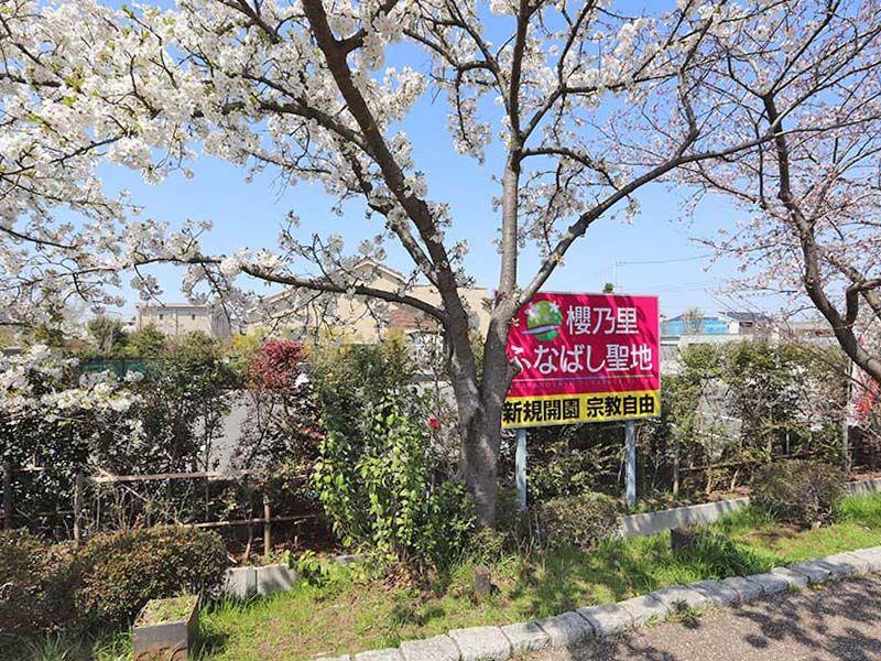 櫻乃里ふなばし聖地 桜の木と案内板