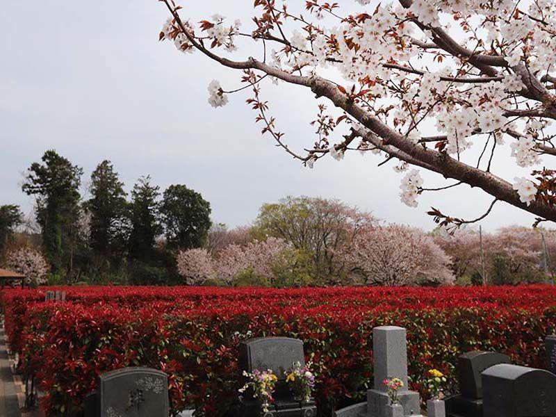 アドミール座間 春には桜が咲く