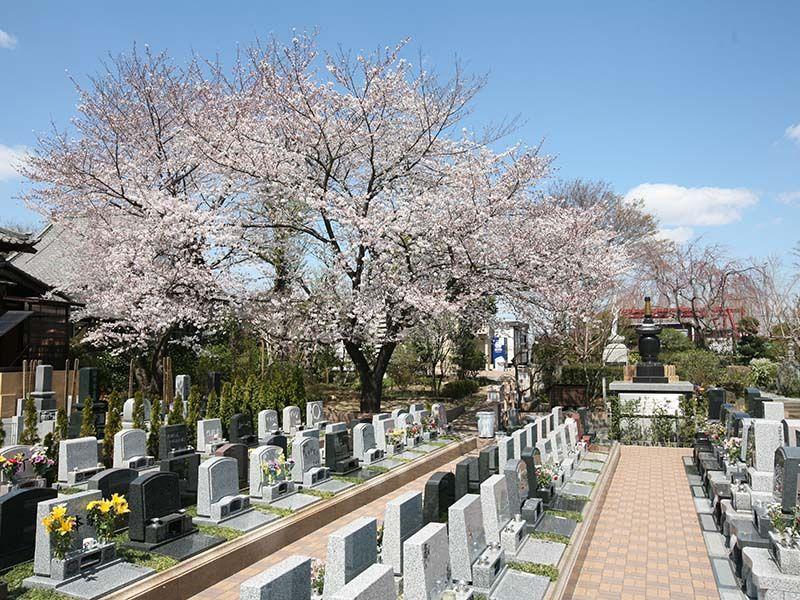 染谷の里 大宮四季彩霊苑 桜が咲き誇る園内