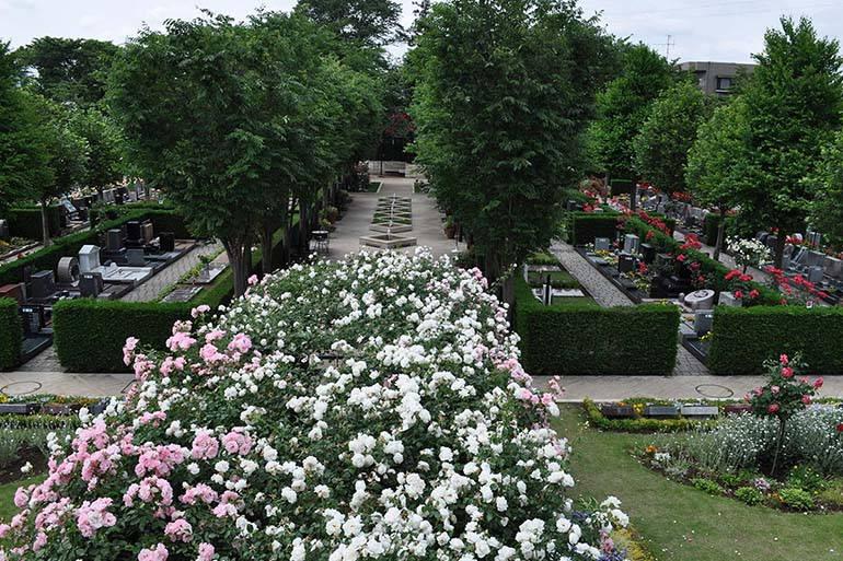 花小金井ふれあいパーク 園内のところどころに咲き誇るバラ