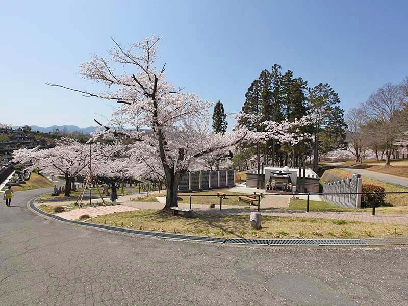 地産霊園 霊園内の大きな桜の木