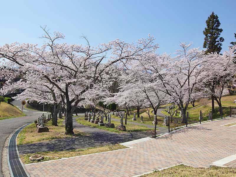 地産霊園 参道に並ぶお地蔵様と桜