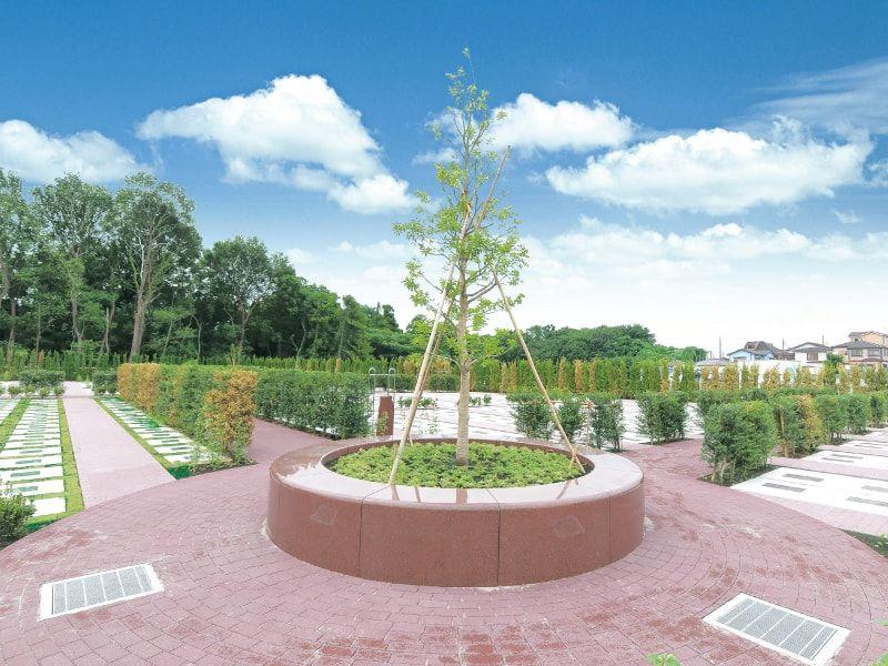 綾瀬蓼川霊園 天空の郷 霊園の真ん中にあるシンボルツリー