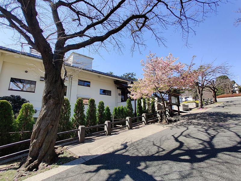 つばき霊園 日の当たる桜並木