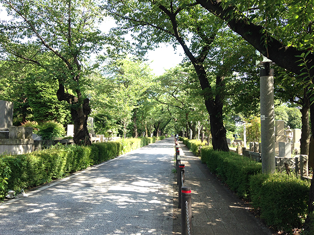 青山霊園の木漏れ日が降り注ぐ並木道