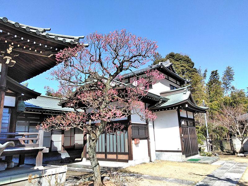 川口草加霊園 はじまりの杜 季節の花