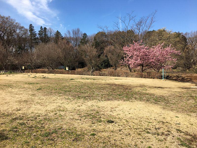 所沢欅聖地霊園 園内芝生が広がる公園