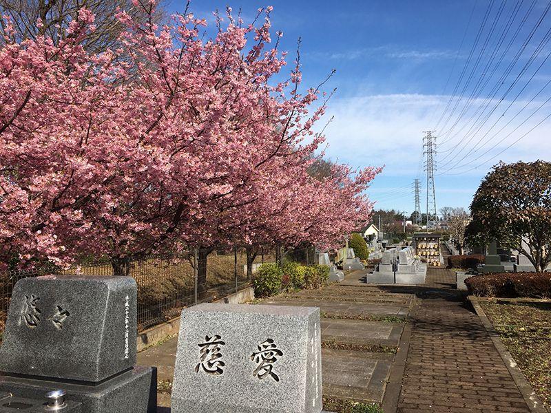 所沢欅聖地霊園 日当たりの良い墓域