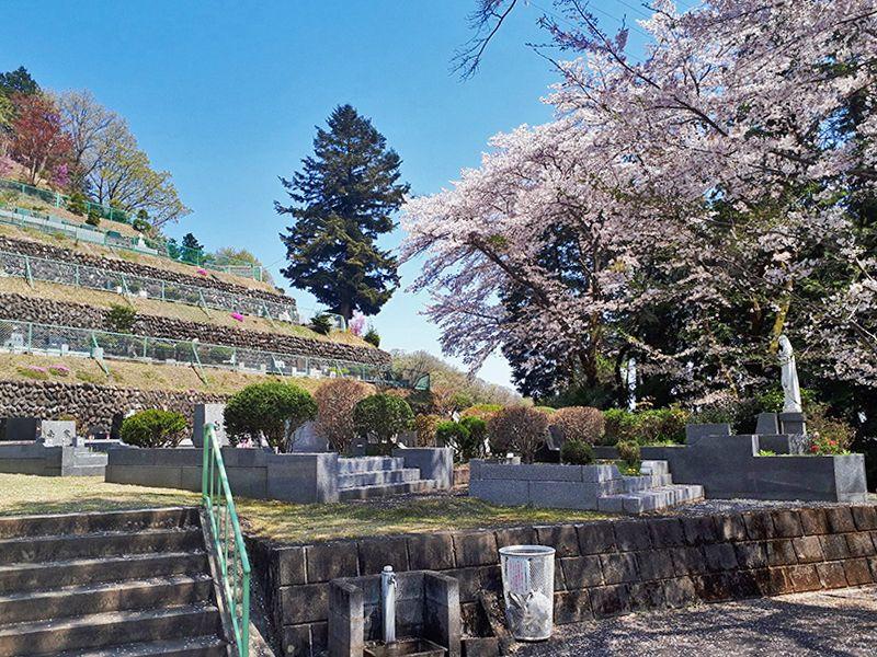 カトリック五日市霊園 桜が舞う霊園内