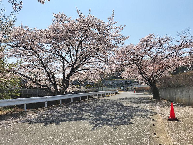 森林公園昭和浄苑 永代供養墓「浄縁墓」 春に楽しめる桜