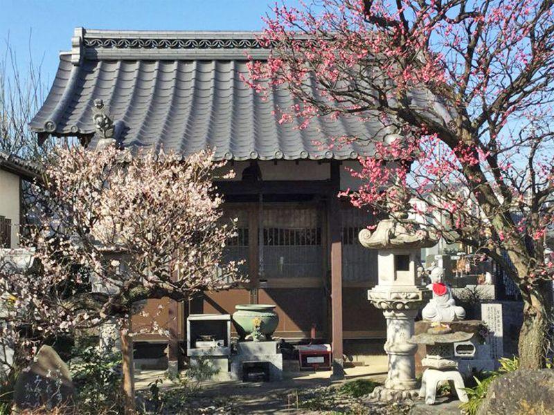 宝性寺 のうこつぼ 四季を感じる植栽が施された本堂