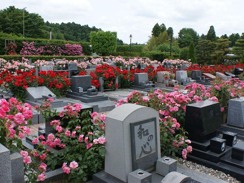 佐倉ふれあいパーク 洋型墓石とバラの花