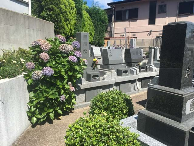 横浜南太田霊苑 アジサイが美しい墓域