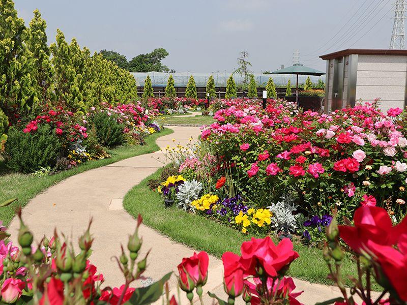 サニープレイス松戸 樹木葬・永代供養墓 参道沿いにも咲き誇る花々