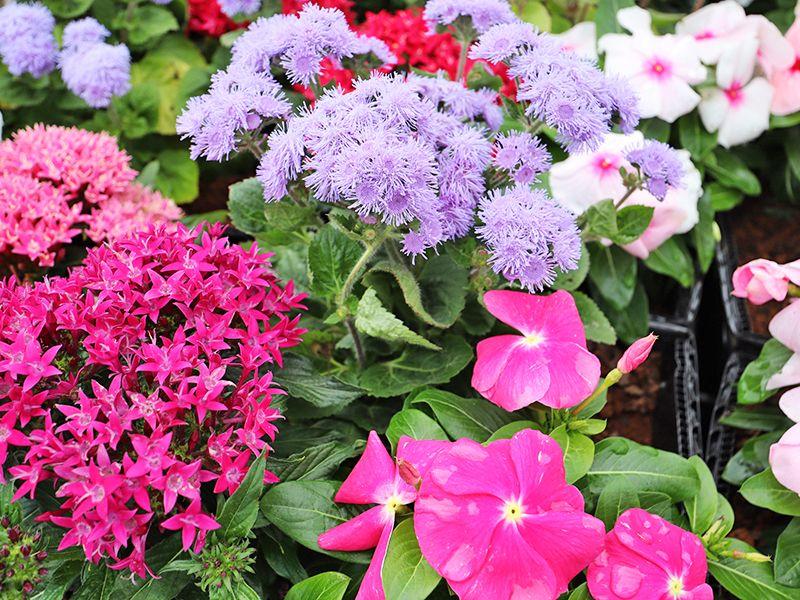 サニープレイス松戸 樹木葬・永代供養墓 色々な種類の花々