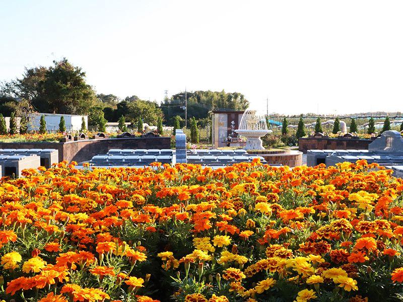 サニープレイス松戸 樹木葬・永代供養墓 温かみのあるオレンジの花
