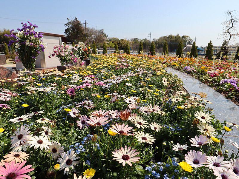 サニープレイス松戸 樹木葬・永代供養墓 見応えのある花々