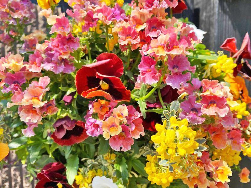 サニープレイス所沢 永代供養墓・樹木葬 園内に咲く花々